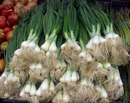 These green onions at Alvarez look very similar to green garlic, but note how their green stalks are tubular instead of flat. Photo copyright 2009 by Zachary D. Lyons.