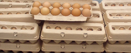 Beautiful eggs at Growing Things. Photo copyright 2009 by Zachary D. Lyons.