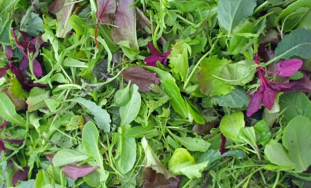 Michaele Blakely's special blend of greens make Growing Thing's spicy salad mix unique. Photo copyright 2009 by Zachary D. Lyons.