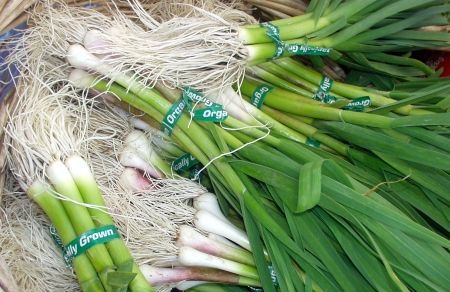 Green garlic at Oxbow Farm. Photo copyright 2009 by Zachary D. Lyons.
