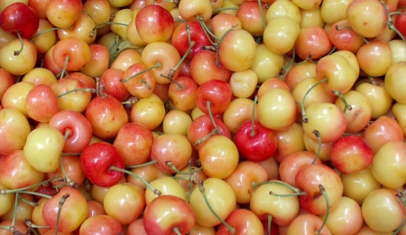 Rainier cherries from Lyall Farms. Photo copyright 2009 by Zachary D. Lyons.