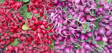 Nash's radishes. Photo copyright 2009 by Zachary D. Lyons.