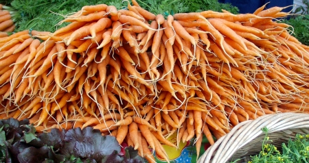 Oxbows infamous carrots are back. Photo copyright 2009 by Zachary D. Lyons.