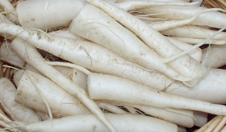 Daikon radishes from Stoney Plains. Photo copyright 2009 by Zachary D. Lyons.