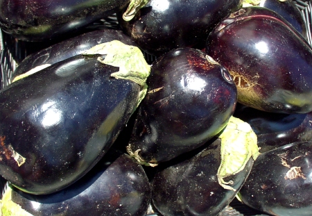 Magnificent eggplant from Anselmo Farms. Photo copyright 2009 by Zachary D. Lyons.