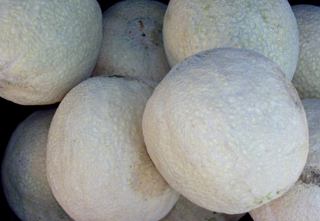 Cantaloupes from Ayala Farms. Photo copyright 2009 by Zachary D. Lyons.