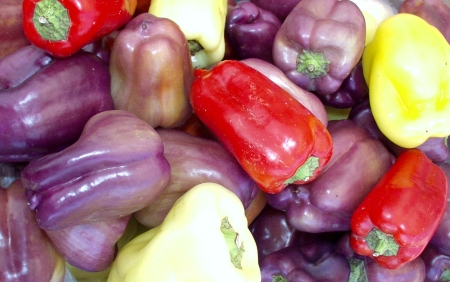 Billy's sweet bell peppers come in many colors. Photo copyright 2009 by Zachary D. Lyons.