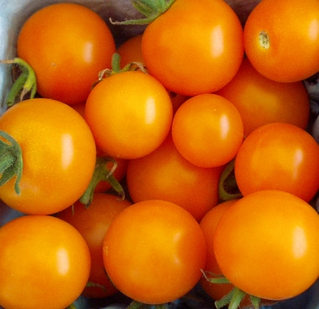 Sun Gold cherry tomatoes from Local Roots. Photo copyright 2009 by Zachary D. Lyons.