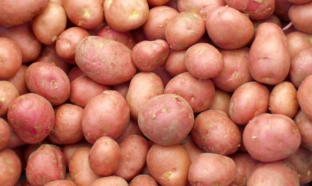 Desiree potatoes from Olsen Farms. Photo copyright 2009 by Zachary D. Lyons.
