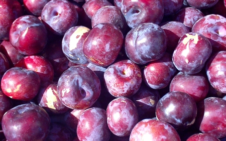 Fresh pluots are available now from Tiny's. Photo copyright 2009 by Zachary D. Lyons.