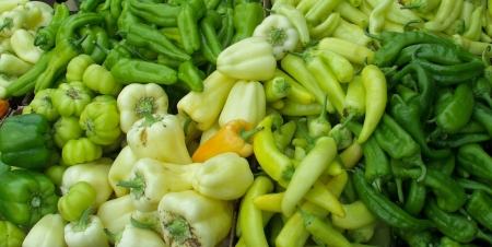 Some many peppers from Alvarez Organic Farms. Photo copyright 2009 by Zachary D. Lyons.