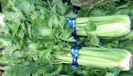 Celery from Boistfort Valley Farm. Photo copyright 2009 by Zachary D. Lyons.