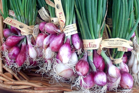 Red pearl onions from Full Circle. Photo copyright 2009 by Zachary D. Lyons.