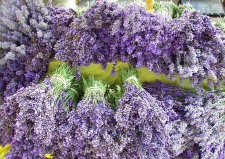 Fresh, brilliant and fragrant lavender from Floating Leaves Lavender Farm. Photo copyright 2009 by Zachary D. Lyons.