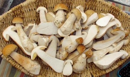 King Bolete, a.k.a. porcini, mushrooms from Foraged & Found Edibles. Photo copyright 2009 by Zachary D. Lyons.