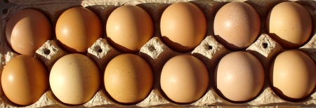 Fresh eggs from Growing Things Farm at Ballard Farmers Market. Copyright Zachary D. Lyons.