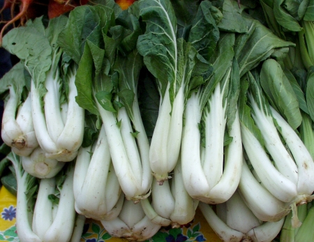 Bok choy from Nash's Organic Produce. Photo copyright 2009 by Zachary D. Lyons.
