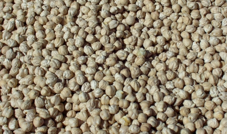 Dried garbanzo beans from Alvarez Organic Farms at Ballard Farmers Market. Copyright Zachary D. Lyons.