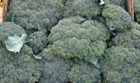 Broccoli from Summer Run Farm. Photo copyright 2010 by Zachary D. Lyons.