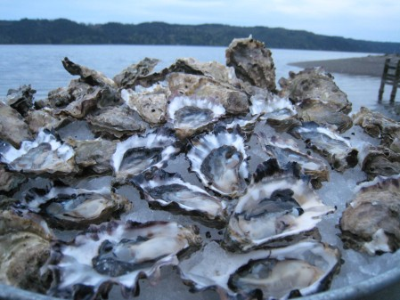 Oysters on the half-shell, on the beach at Hama Hama Oyster Company. Photo courtesy Hama Hama Oyster Company.