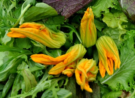 Squash blossoms & baby squash from Colinwood Farms. Photo copyright 2011 by Zachary D. Lyons.