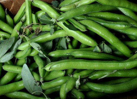 Fresh fava beans from Alvarez Organic Farms. Photo copyright 2011 by Zachary D. Lyons.