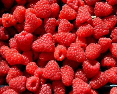 Raspberries from Sidhu Farms. Photo copyright 2011 by Zachary D. Lyons.