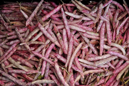 Cranberry shelling beans from Alm Hill Gardens. Photo copyright 2011 by Zachary D. Lyons.