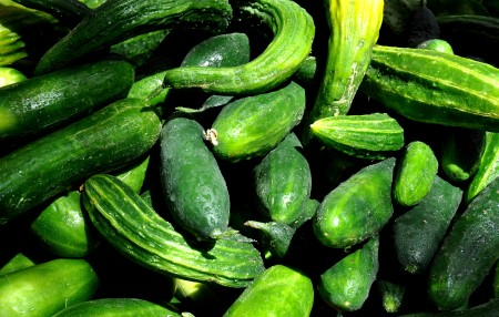 Cucumbers from Nash's Organic Produce. Photo copyright 2011 by Zachary D. Lyons.