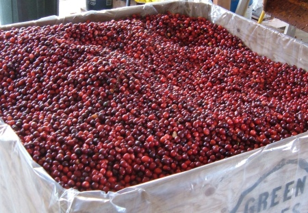 Fresh cranberries from Bloom Creek Cranberry Farm. Photo courtesy Bloom Creek.