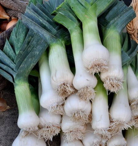 Leeks from One Leaf Farm. Photo copyright 2011 by Zachary D. Lyons.