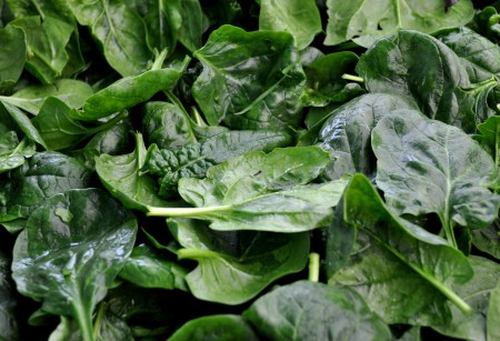 Baby spinach from Colinwood Farms. Photo copyright 2012 by Zachary D. Lyons.