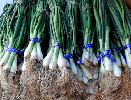 Spring sweet onions from Alvarez Organic Farms. Photo copyright 2012 by Zachary D. Lyons.