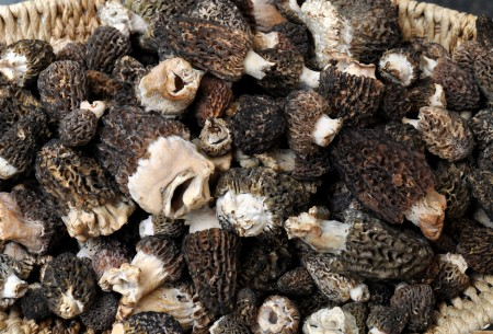 Wild morel mushrooms from Foraged & Found Edibles. Photo copyright 2012 by Zachary D. Lyons.