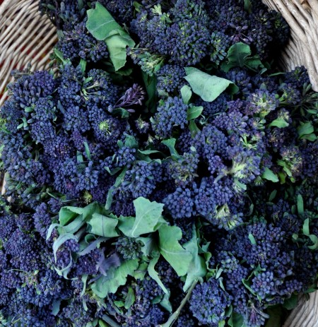 Delicious purple sprouting broccoli from Oxbow Farm. Photo copyright 2012 by Zachary D. Lyons.