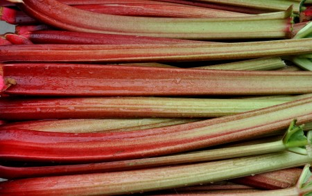 Rhubarb from Sidhu Farms. Photo copyright 2012 by Zachary D. Lyons.