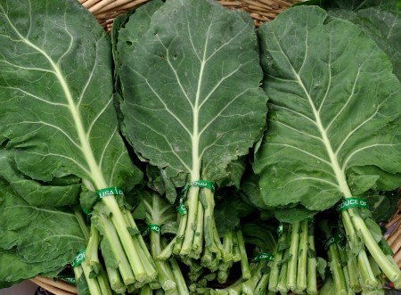 Collard greens from Oxbow Farm. Photo copyright 2012 by Zachary D. Lyons.