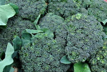 Broccoli from Summer Run Farm. Photo copyright 2012 by Zachary D. Lyons.