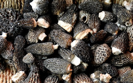 Morel mushrooms from Foraged & Found Edibles.Photo copyright 2012 by Zachary D. Lyons.