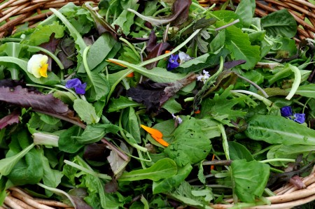 Salad mix from Growing Things Farm. Photo copyright 2012 by Zachary D. Lyons.