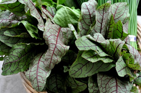 Red Vein Sorrel from Stoney Plains Organic Farm. Photo copyright 2012 by Zachary D. Lyons.