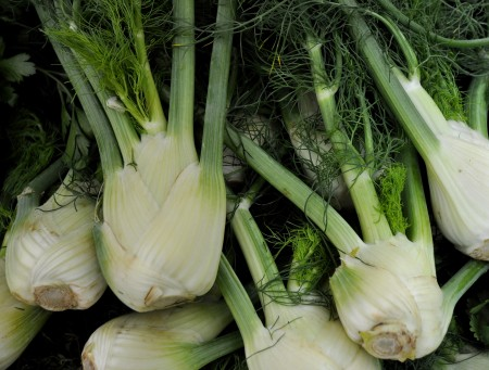 Fennel bulb from Boistfort Valley Farm. Photo copyright 2012 by Zachary D. Lyons.