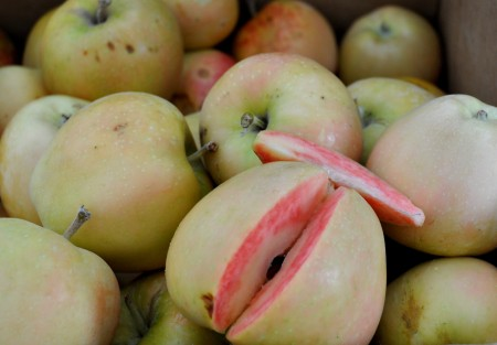 Pink Pearl apples from Jerzy Boyz. Photo copyright 2012 by Zachary D. Lyons.
