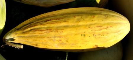 Banana cantaloupe from Lyall Farms. Photo copyright 2012 by Zachary D. Lyons.