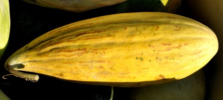 Banana cantaloupe from Lyall Farms. Photo copyright 2012 by Zachary D. Lyons.