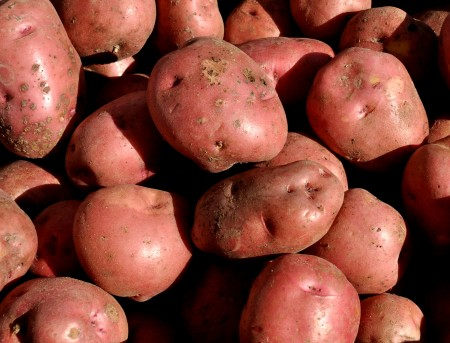 Red Lasoda potatoes from Olsen Farms. Photo copyright 2012 by Zachary D. Lyons.
