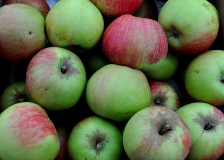 Prairie Spy apples from Booth Canyon Orchards. Photo copyright 2012 by Zachary D. Lyons.