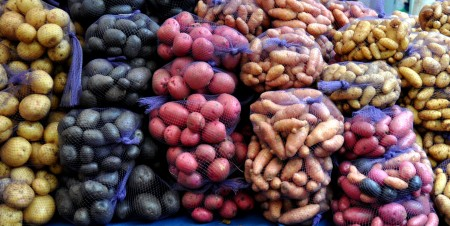 Potatoes from Colinwood Farms. Photo copyright 2012 by Zachary D. Lyons.