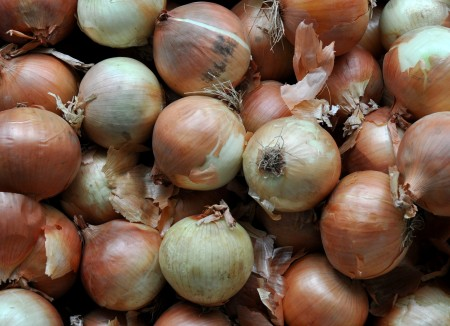 Sweet yellow Spanish onions from Lyall Farms. Photo copyright 2012 by Zachary D. Lyons.