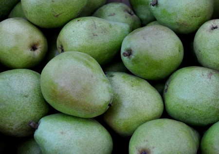 D'Anjou Pears from Martin Family Orchards. Photo copyright 2012 by Zachary D. Lyons.